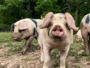 High-Welfare Pork Redditch
